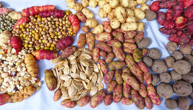 Meollco and Oca tubers - cultivate in Peru, Bolivia and Ecuador, along with beans and potato seeds on the display at food market
