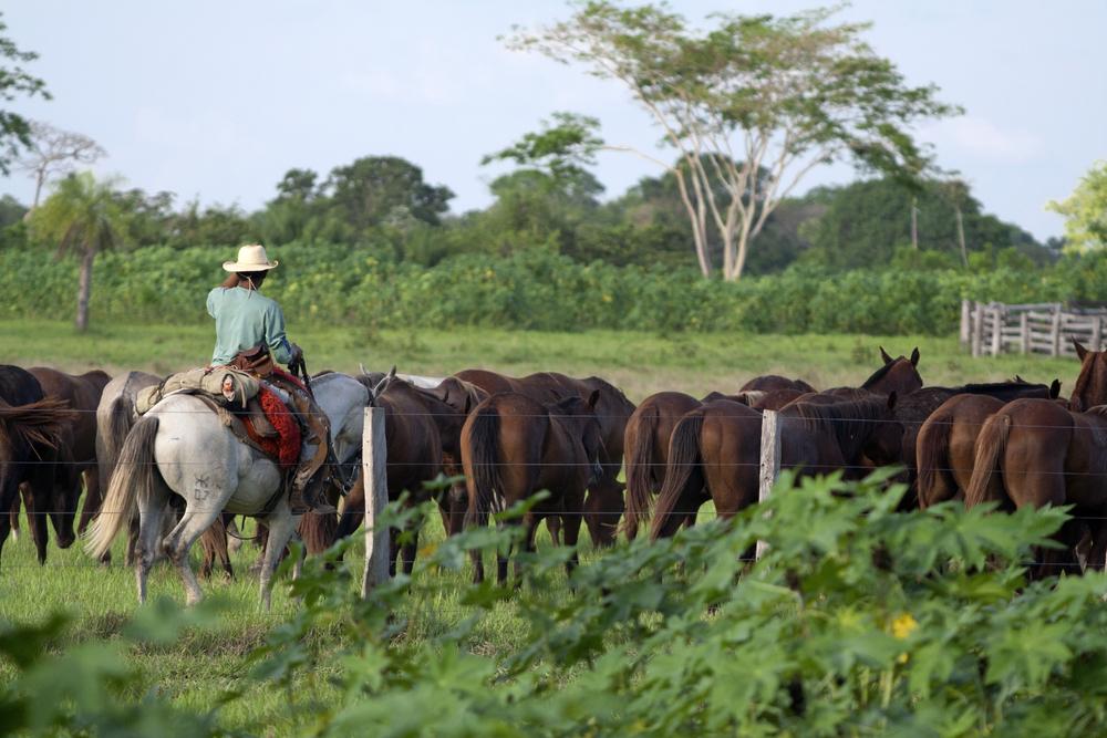 Gauchos in Brazil.