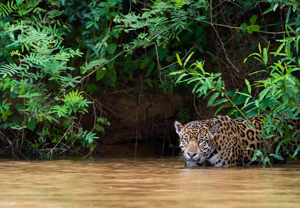 Brazilian Pantanal.