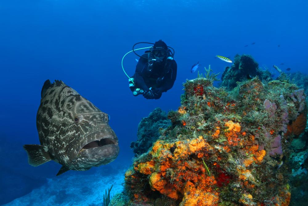 Scuba diving at Comuzel, Mexico