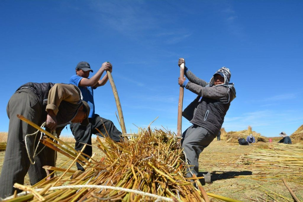 Creating the traditional Lake Titicaca reed boats