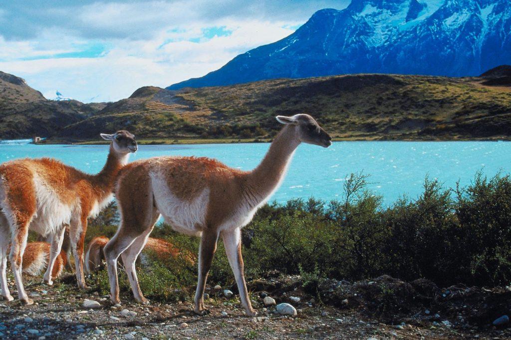 Peruvian Andes.