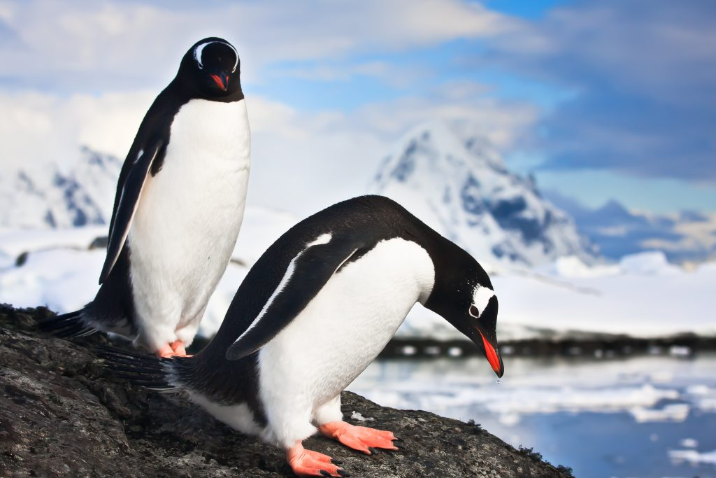 Affordable Antarctica: meeting penguins