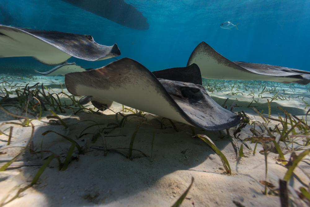 A group of rays