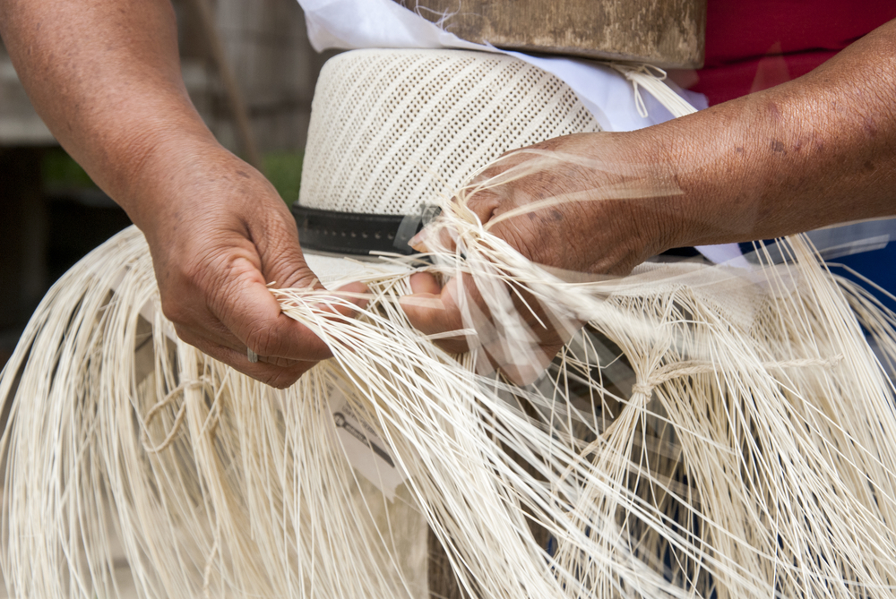 Creating a Panama hat of Toquilla palm.