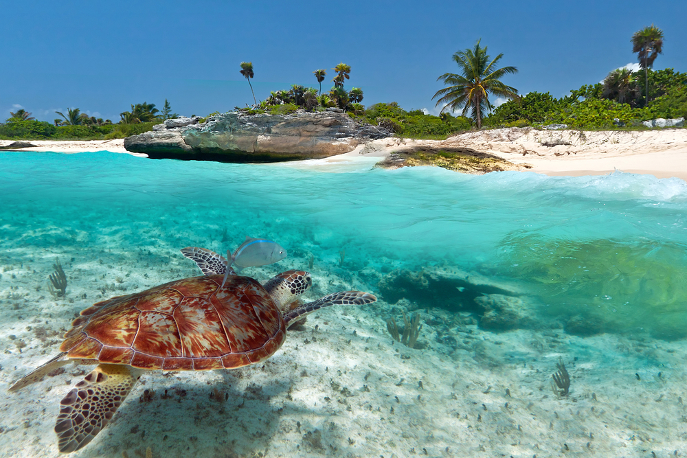 National Green Turtle in Mexico