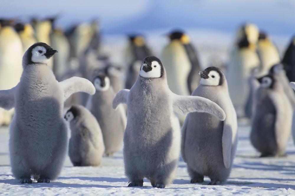 Penguins on Antarctica.