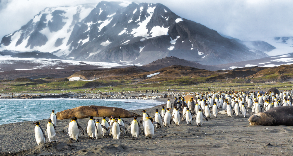 Take a charter flight from South America to Antarctica