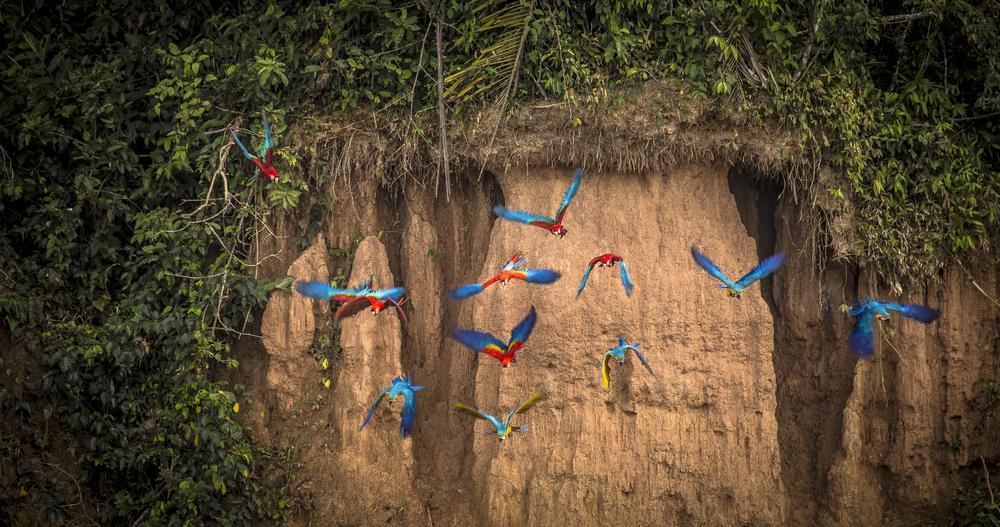 Tambopata National Reserve, Peru.