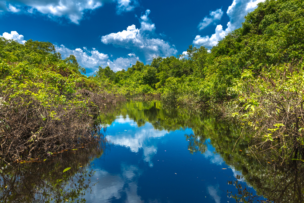 Tourism and sustainability: The Brazilian Amazon Rainforest.