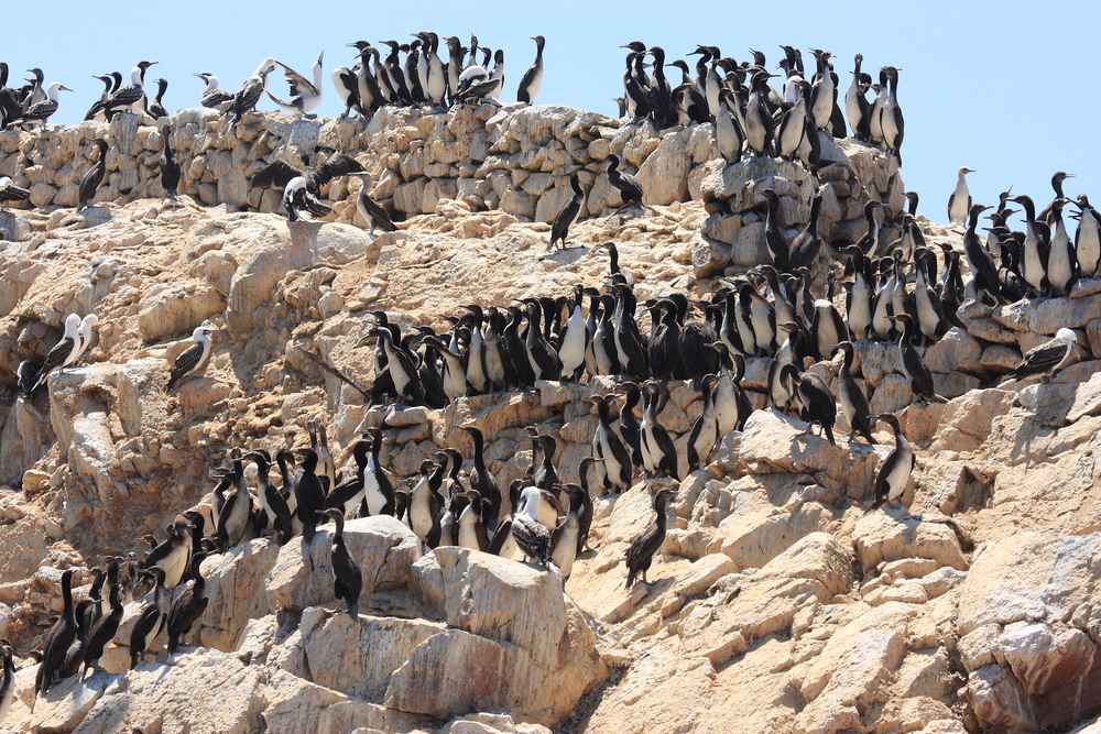 Paracas and the Ballestas Islands of Peru