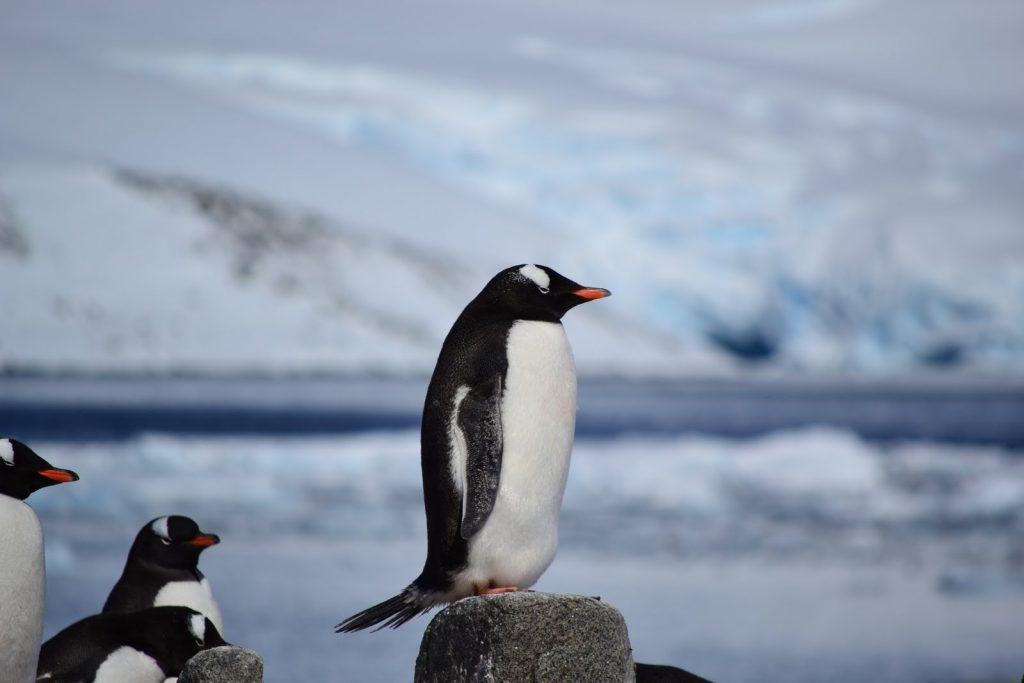 The Great Chimu Antarctica Cruises Sale. Photo credit: Simon Evans