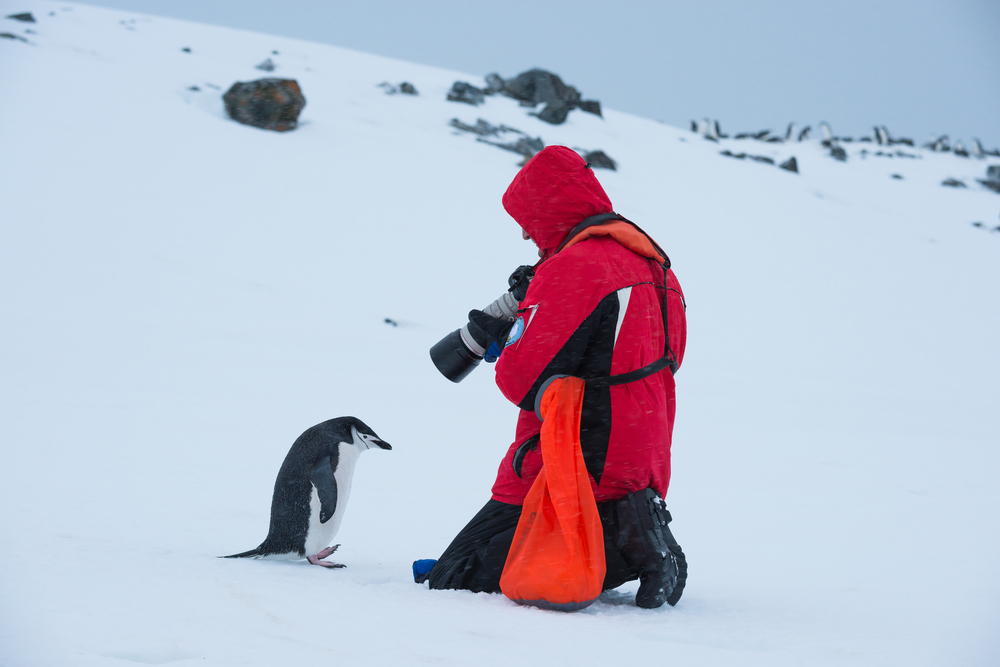 A tourist taking a picture of a Penguin from a small distance in Antarctica.