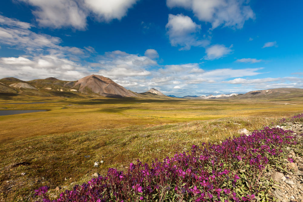 The Russian Arctic features tundra in Chukotka.