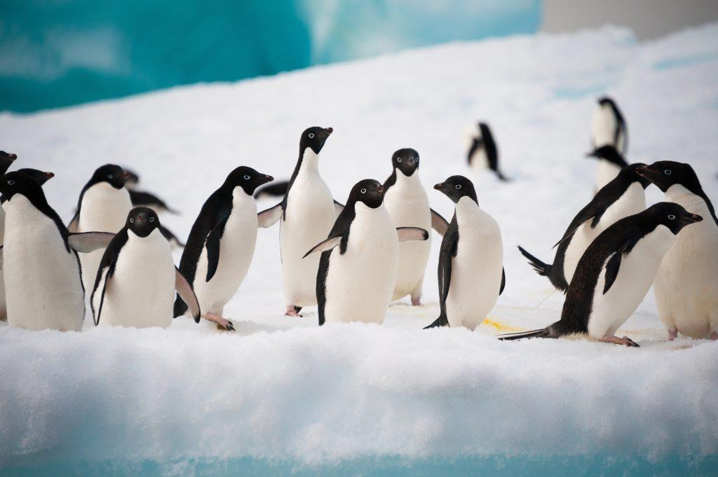 Visit Antarctica in December.