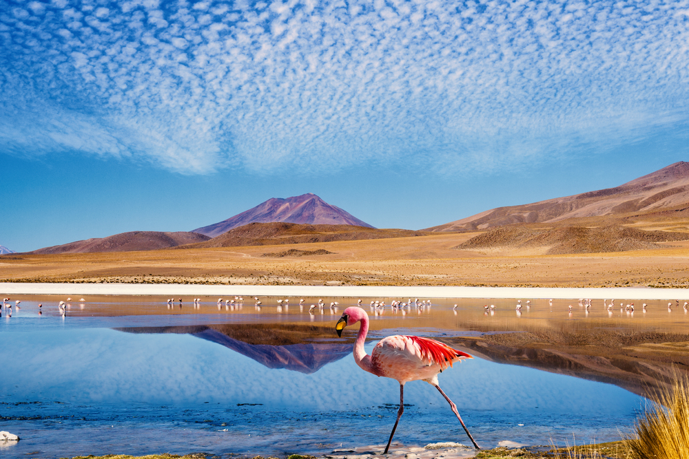 Passing the Altiplano in Bolivia.