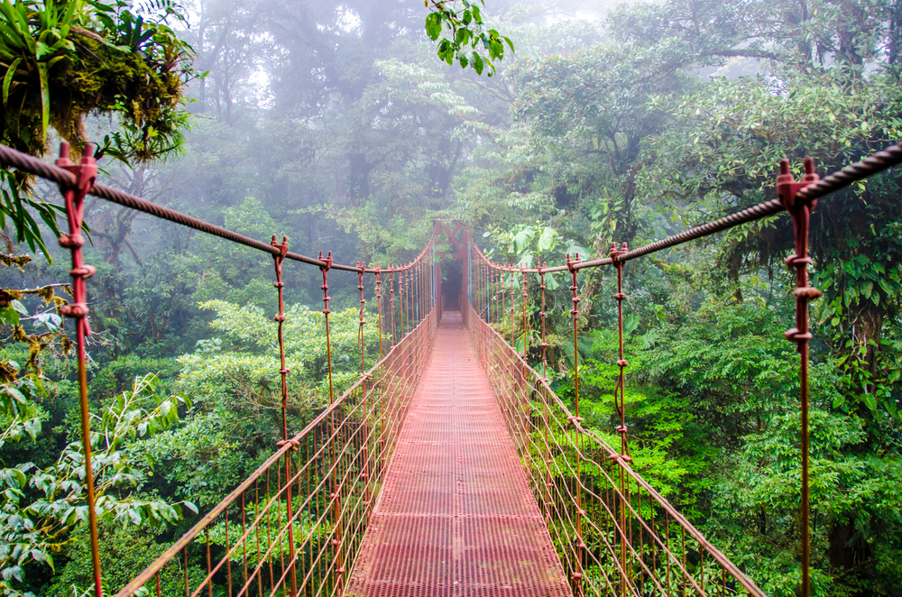 Walk the bridge into the rainforest in Monte Verde in Costa Rica