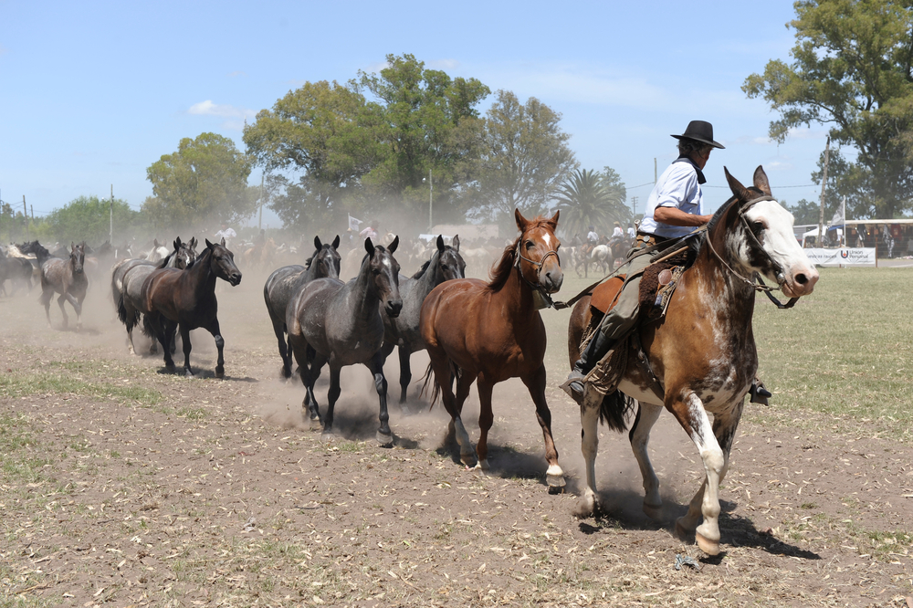 The Gauchos in Argentina.