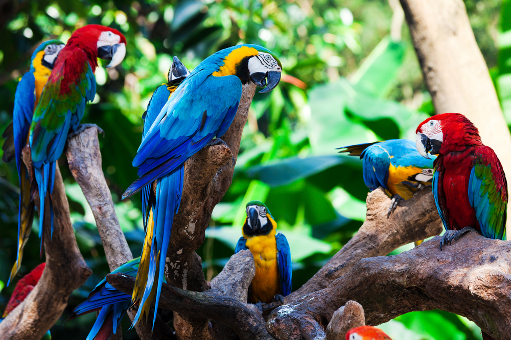 group of parrots in a tree in the Amazon