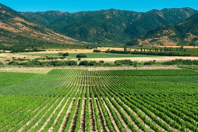 Colchagua Valley, Chile