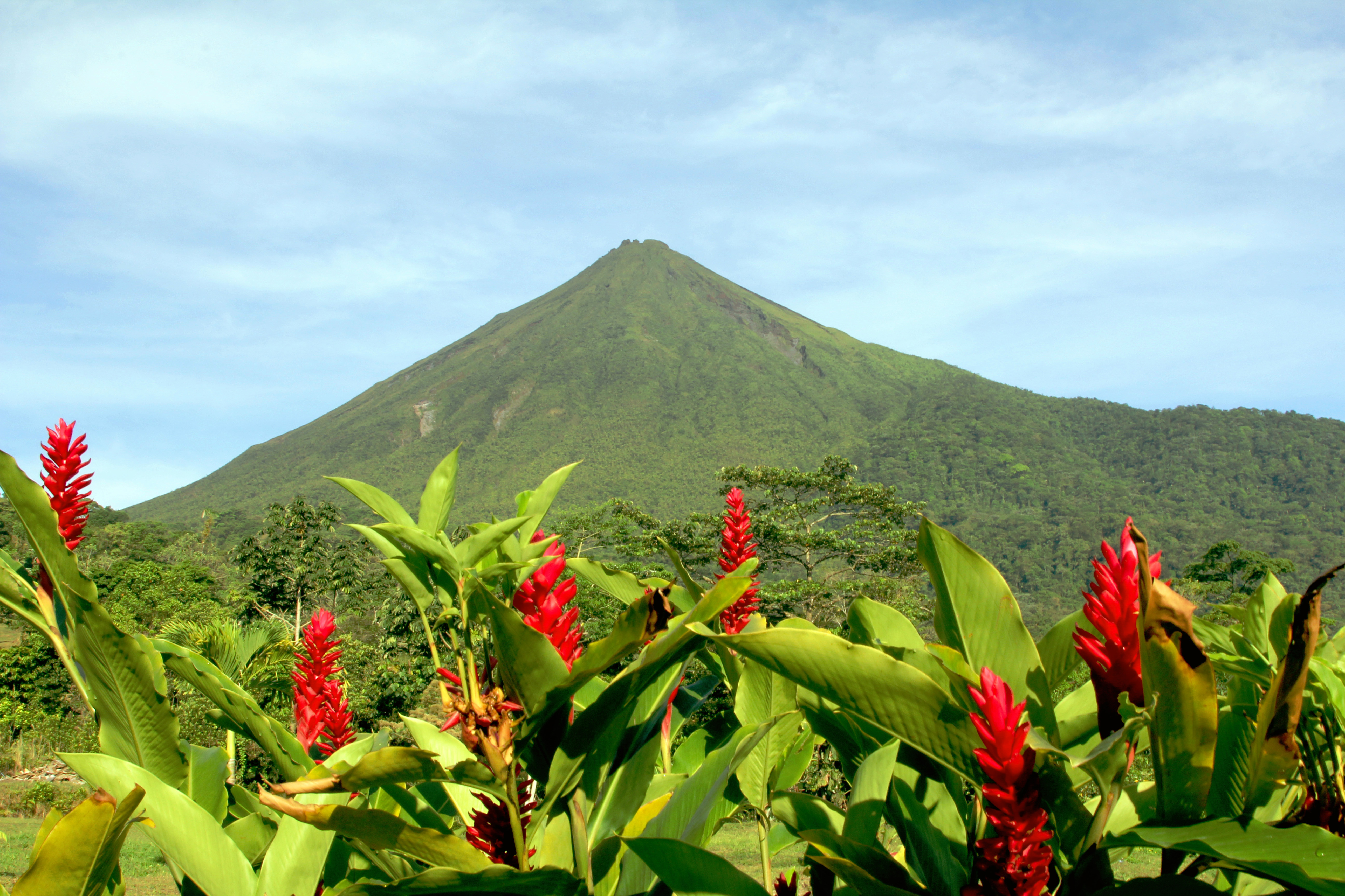 Red flowers and greenery with the Arenal Volcano in the background in Costa Rica.
