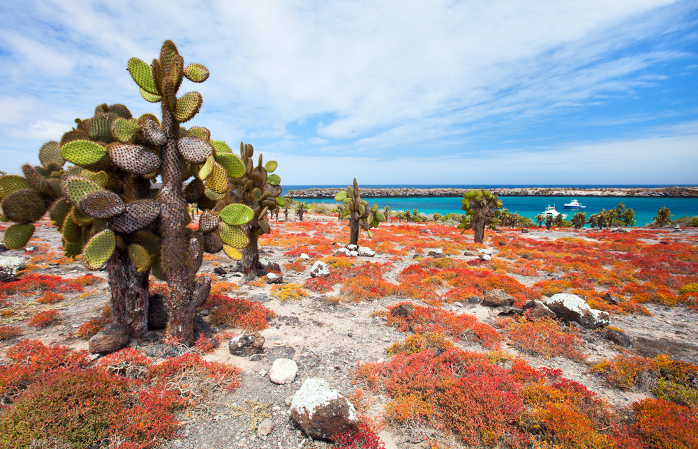 Scenery and plants in the South Plaza islands in the Galapagos