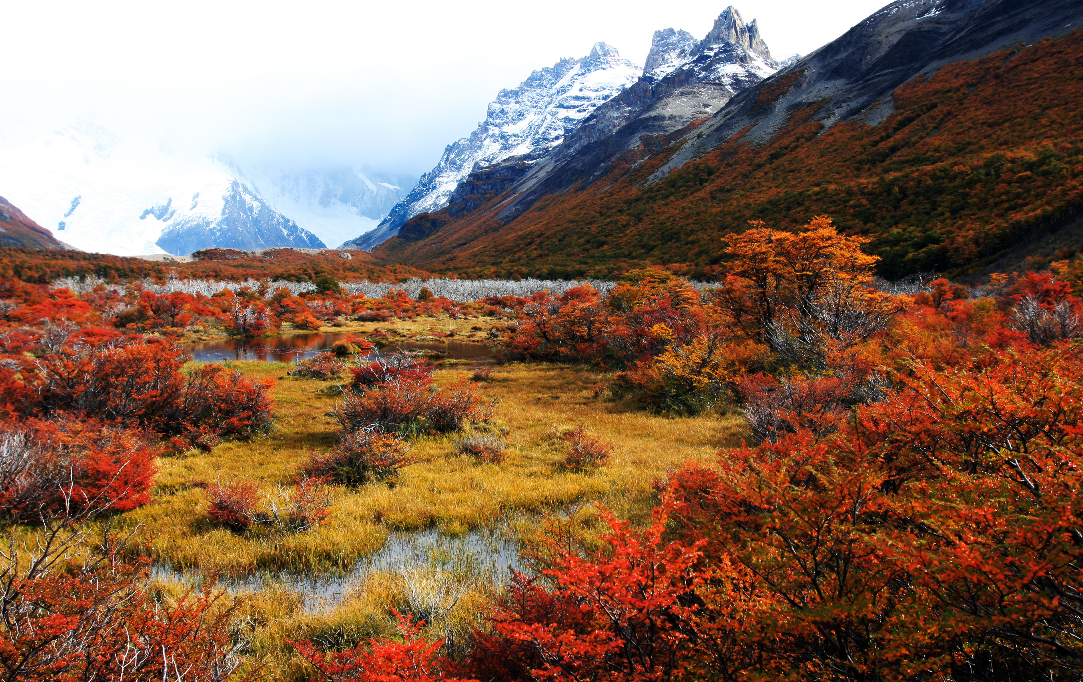 Colourful plants in Autumn in Patagonia