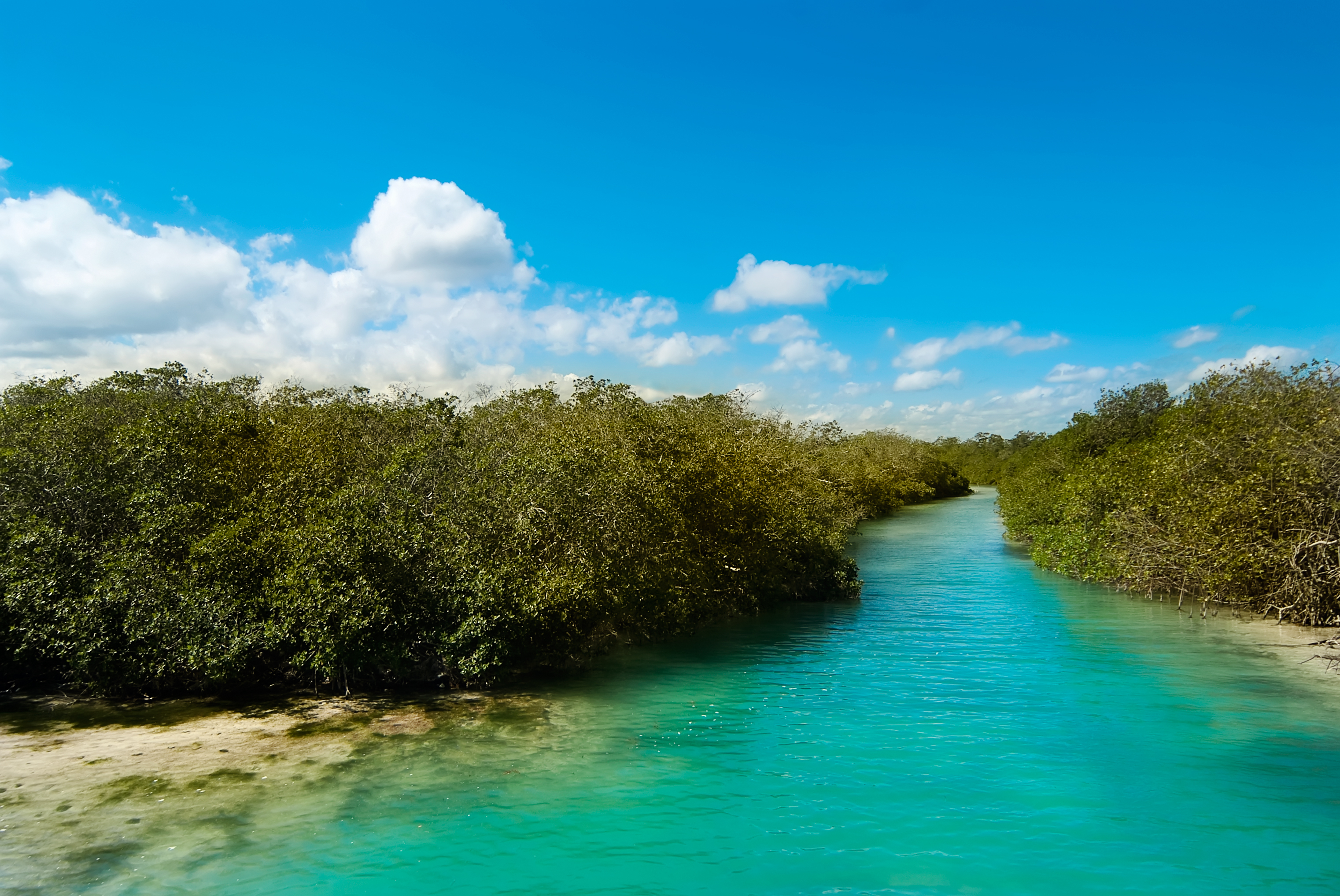 River and trees at Sian Kaan reserve in Mexico