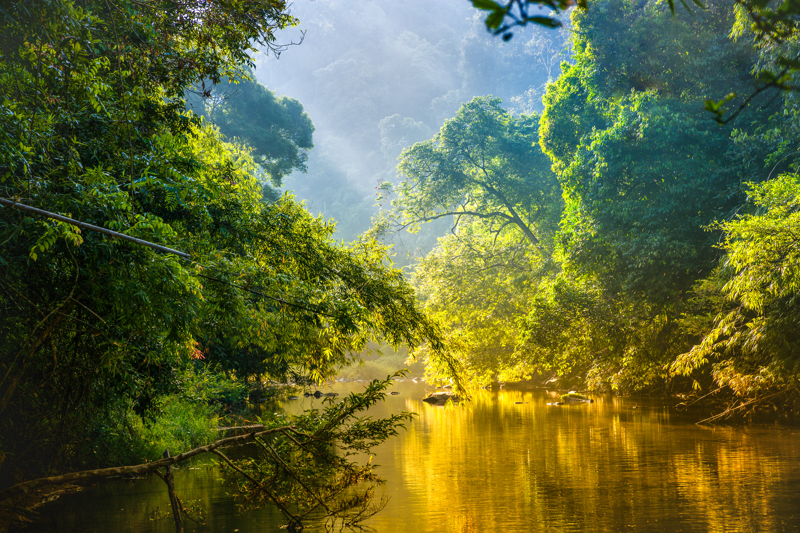 Amazon rainforest and river