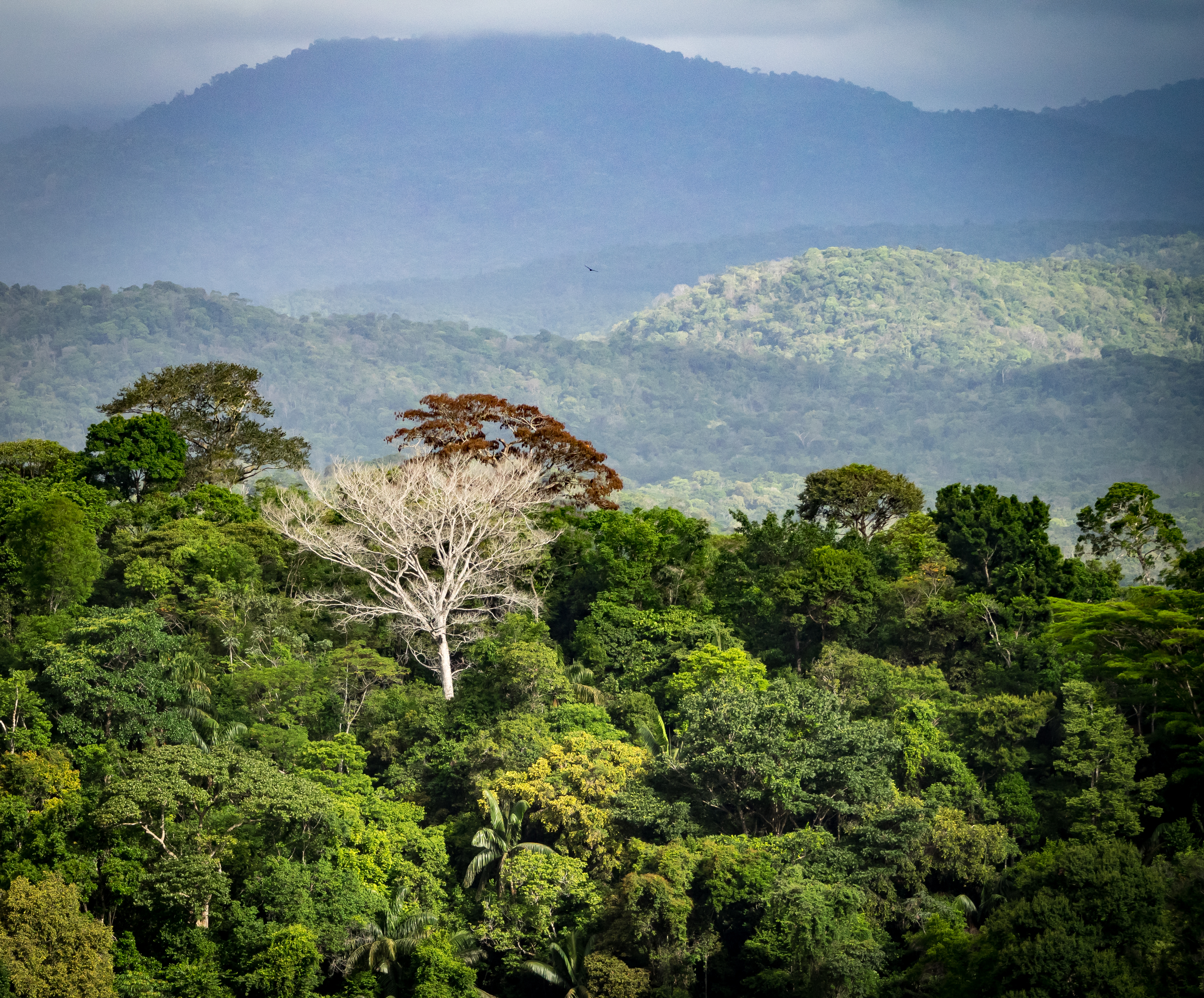 Surama Mountain - Views around Guyana's Interior and rainforest. Photo Credit: Shutterstock