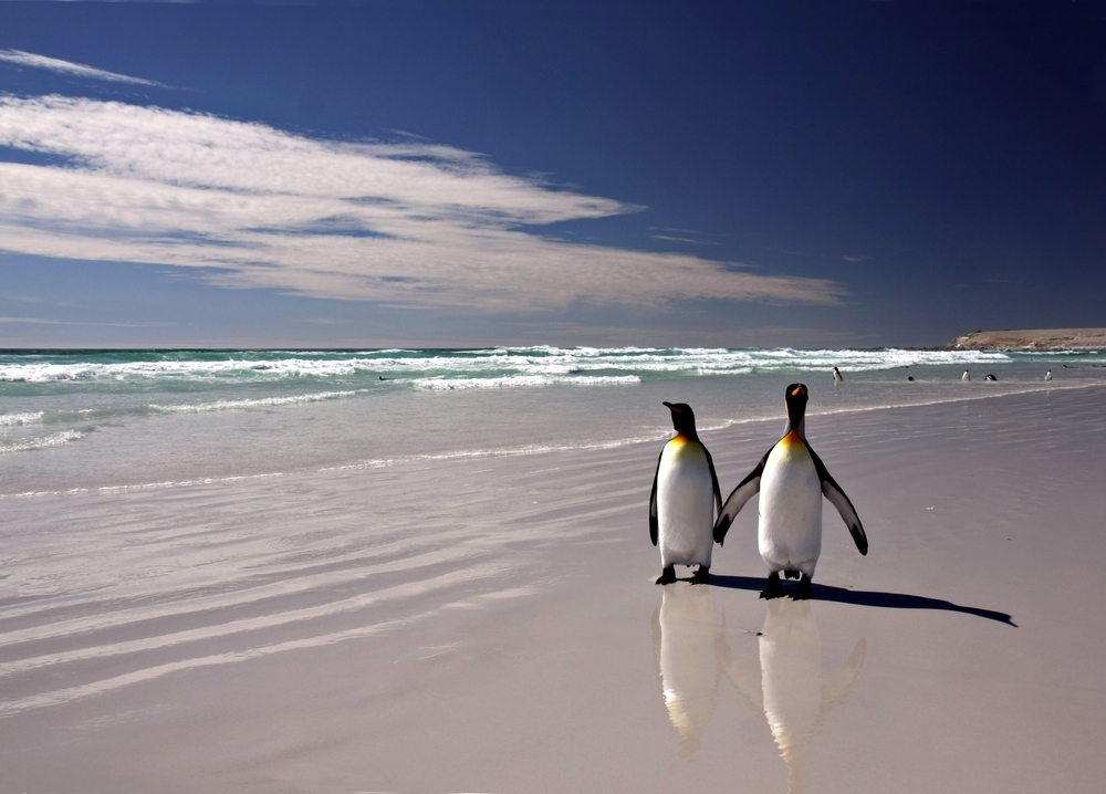 Travel Falklands