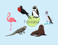 Wildlife of Floreana Island of the Galapagos Islands