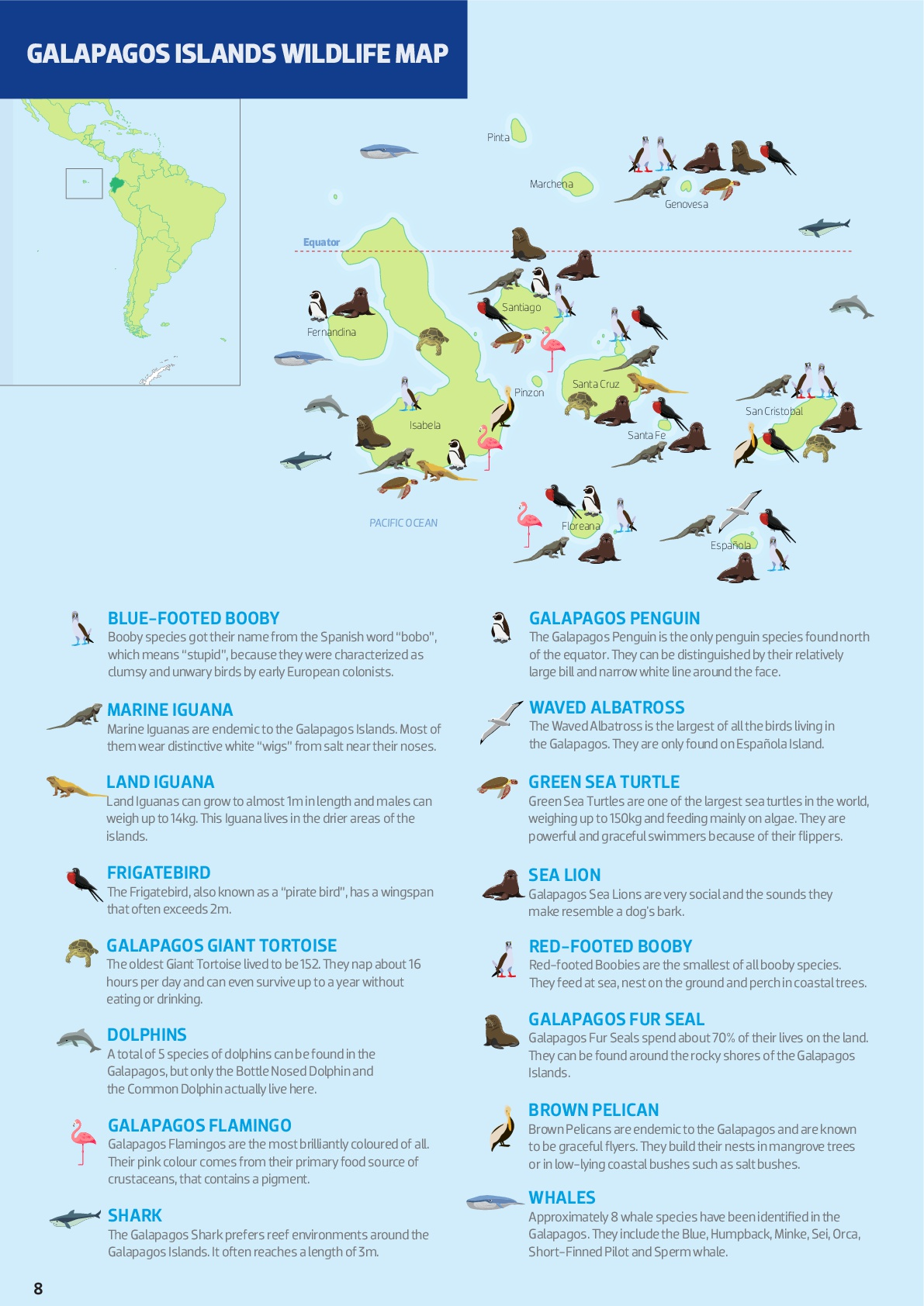 Where to find the wildlife in the Galapagos Islands