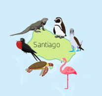 Wildlife of Santiago Island of the Galapagos Islands