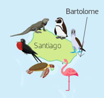 Wildlife of Bartolome Island of the Galapagos Islands