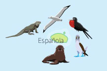 Wildlife of Espanola Island in the Galapagos Islands