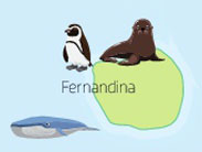 Wildlife of Fernandina Island of the Galapagos Islands