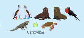 Wildlife of Genovesa Island of the Galapagos Islands