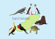 Wildlife of San Cristobal Island in the Galapagos Islands