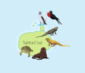Wildlife of Santa Cruz Island on the Galapagos Islands