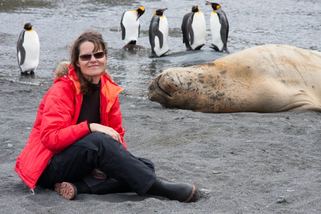 South Georgia, Antarctica - Circa December 2008: a tourist in the middle of penguins and elephant seals