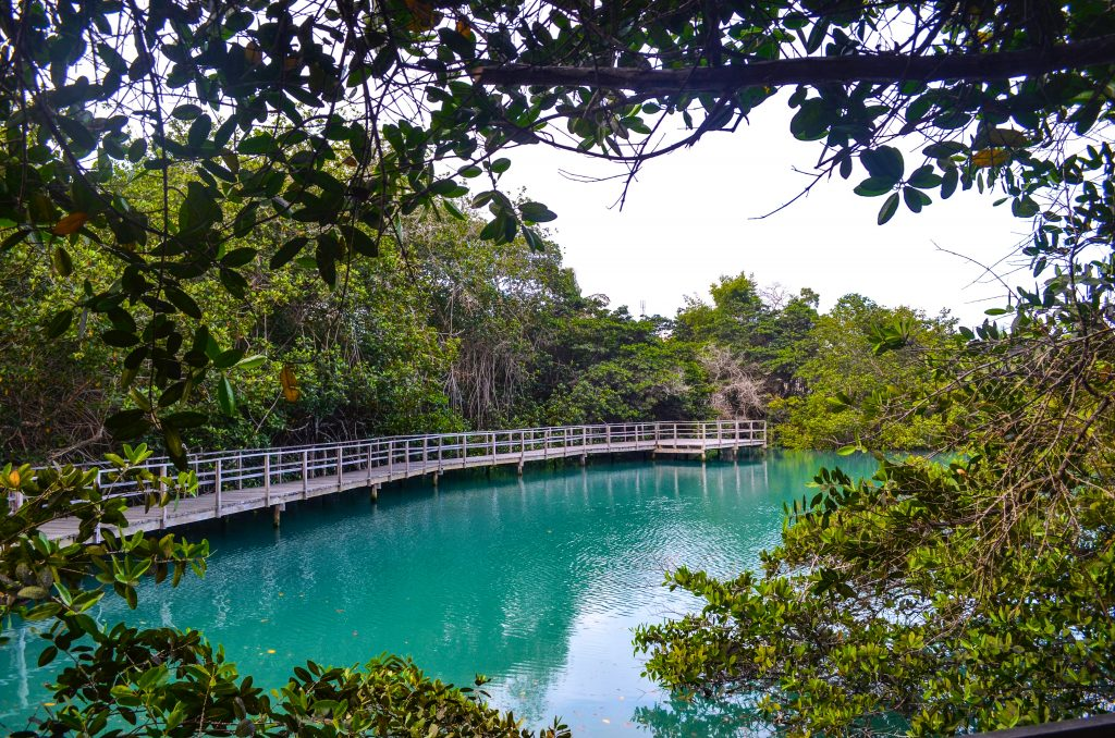 A saltwater lagoon in the town of Puerto Ayora