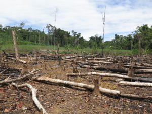 Deforestation in Amazonia (Peru, Brasil, Colombia, Ecuador, Bolivia) credit shutterstock