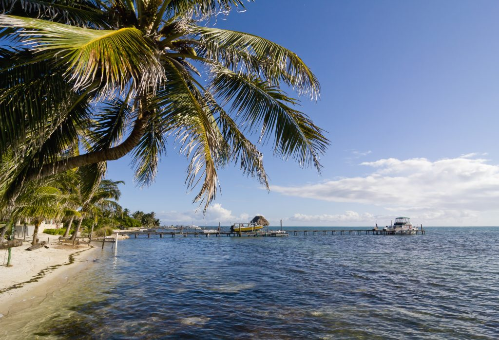 Palm tree and dock in clear blue tropical water in Caye Caulker, Belize