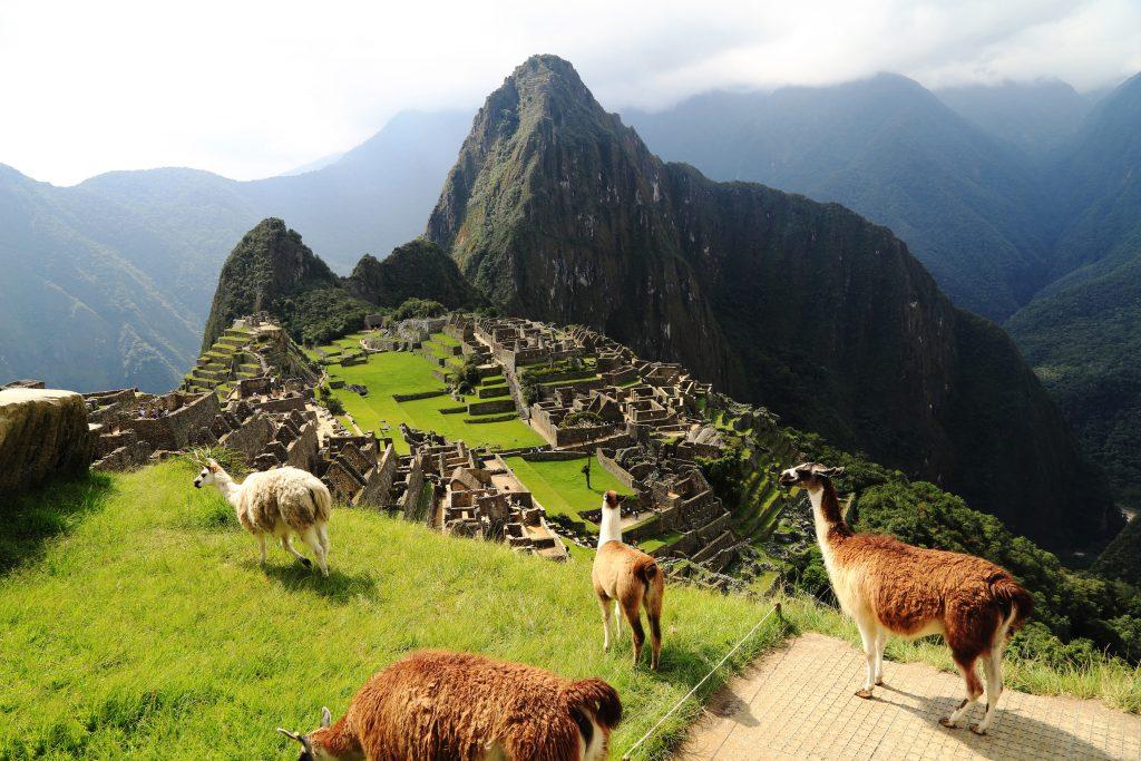 Llama at Machu Picchu in Peru credit shutterstock