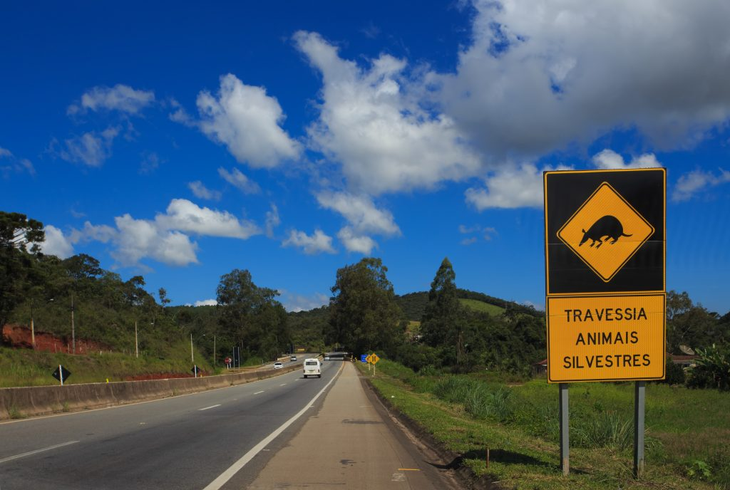 wild animals crossing sign on a brazilian road at sunny day credit shutterstock