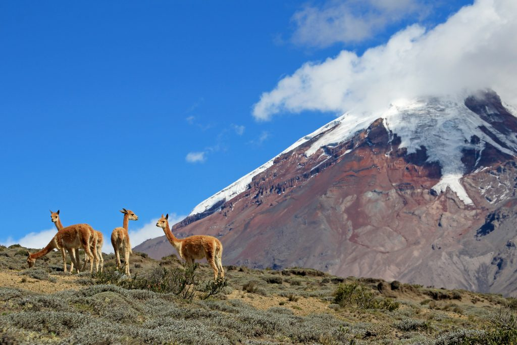 Beautiful morning view of mountain, river, and a group of guanacos at Torres del Paine National Park, Chile. credit shutterstock