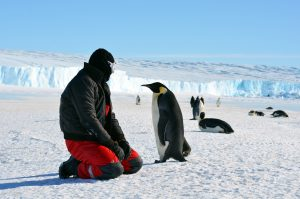 Progress station, Antarctica January 10, 2016: Emperor penguin chick and the man in the red suit.Close-up credit shutterstock