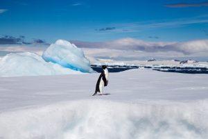 Adelie Penguin on an ice flow in the Antarctic Sound, Antarctica credit shutterstock