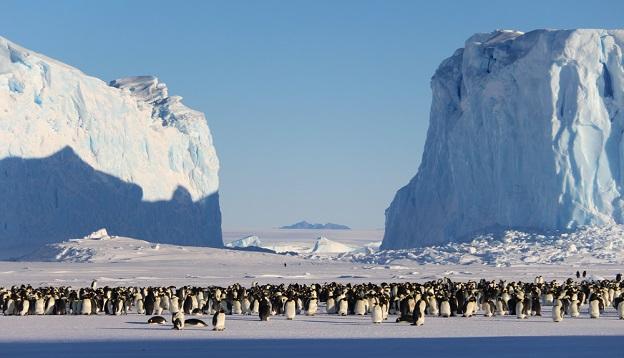 Dramatic landscape emperor penguins.